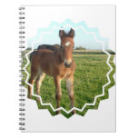 Horse Foal Notebook