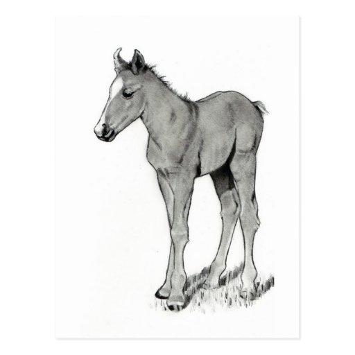 HORSE: FOAL: PENCIL ART POSTCARDS