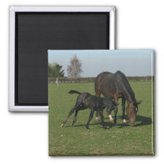 Horse & Foal Square Magnet