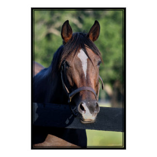 Horse Friendly Art Poster -40x60-click for smaller