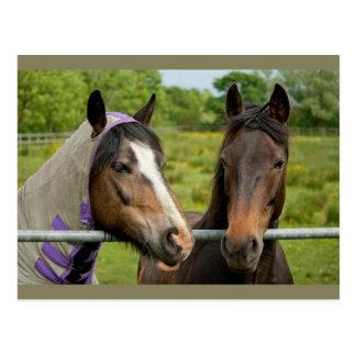 Horse Friends Postcard