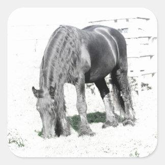 Horse Friesian Stallion Animal Nature Black white Square Sticker