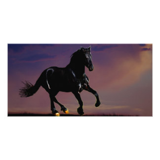Horse galloping free photo cards