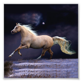 horse galloping photograph