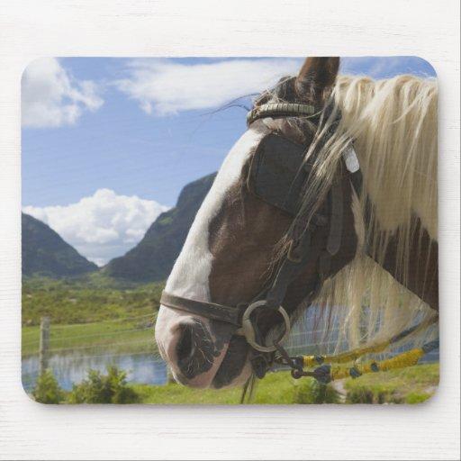 Horse, Gap of Dunloe, County Kerry, Ireland Mousepad