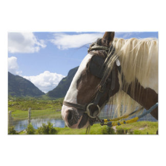 Horse, Gap of Dunloe, County Kerry, Ireland Photo Print