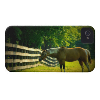 Horse Grazing Blackberry Bold iPhone 4 Cover