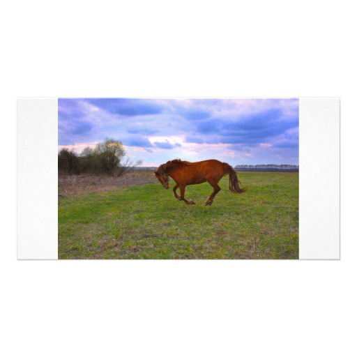 Horse Grazing in a field Personalized Photo Card