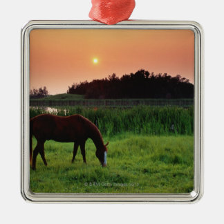 Horse Grazing in Field at Sunset Near Edmonton, Christmas Ornament