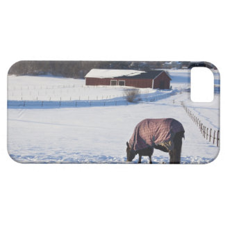 Horse grazing on a snow-covered field on Ekero 2 iPhone 5 Cover
