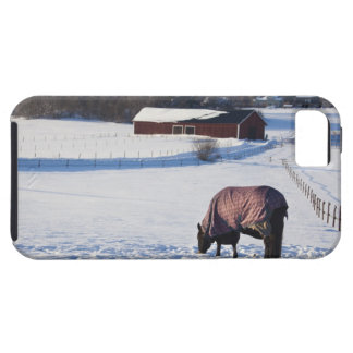 Horse grazing on a snow-covered field on Ekero 2 iPhone 5 Covers