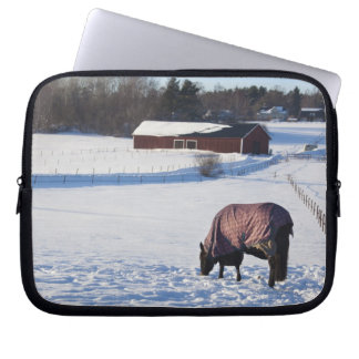 Horse grazing on a snow-covered field on Ekero 2 Laptop Sleeve