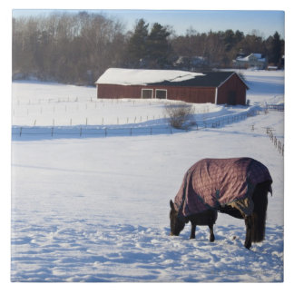 Horse grazing on a snow-covered field on Ekero 2 Tile