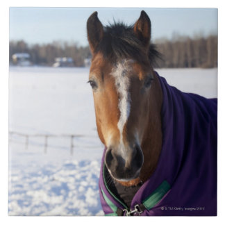 Horse grazing on a snow-covered field on Ekero Tile