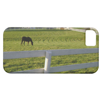 Horse grazing on farm iPhone 5 cover