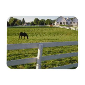 Horse grazing on farm rectangular photo magnet