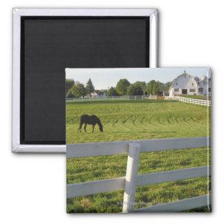 Horse grazing on farm square magnet