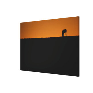 Horse grazing on Kentucky farm Stretched Canvas Print