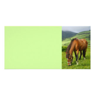 Horse grazing photo card