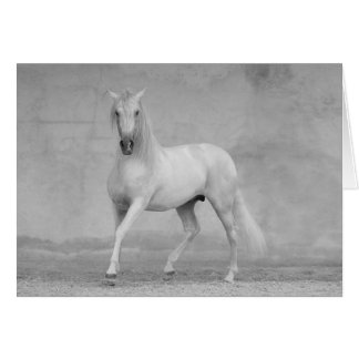 Horse Greeting Card - Classical Spanish Stallion
