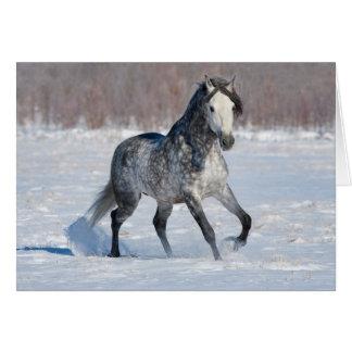 Horse Greeting Card - Dappled Grey Snow Stallion