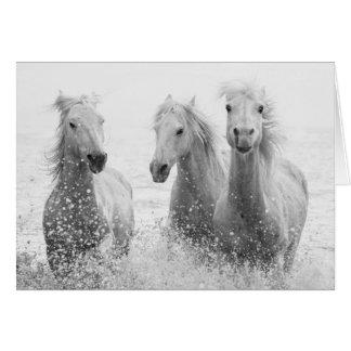 Horse Greeting Card - Three White Horses Splashing