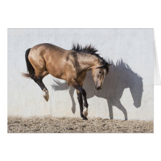 Horse Greeting Card - Touching Down