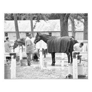 Horse Haven Photo