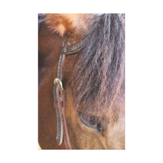 Horse head and Western Tack Canvas Print