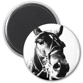 Horse Head Refrigerator Magnets