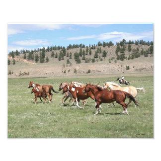 Horse Herd and Cowboy Photo Art