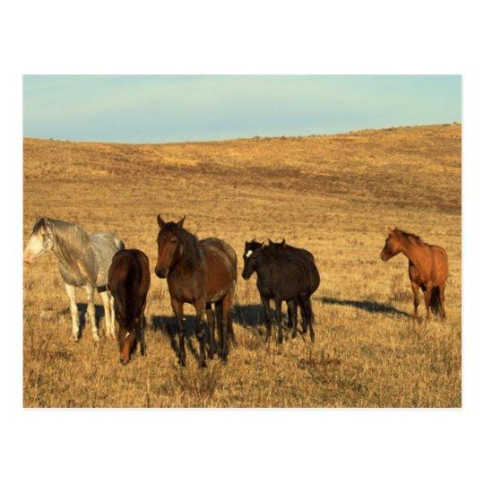 Horse Herd in the West Postcard