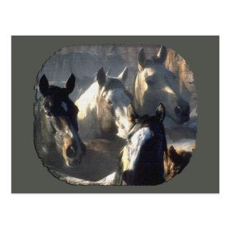 Horse Herd Postcard
