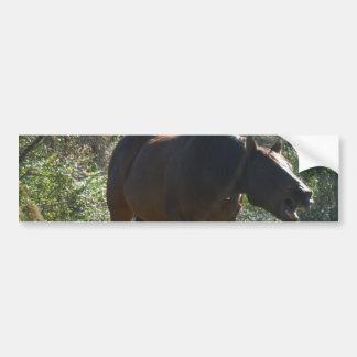 Horse in Autumn Bumper Sticker