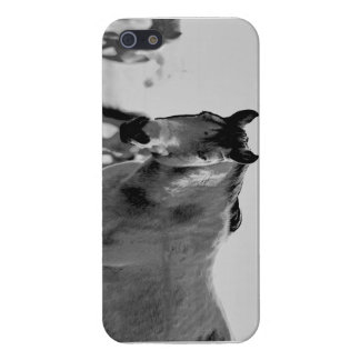 Horse in B/W case iPhone 5 Covers