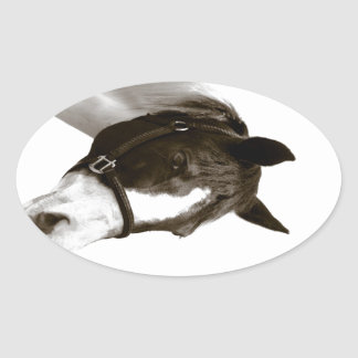 Horse in Black and White Sticker