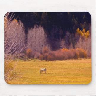 Horse In Fall I Mouse Mat