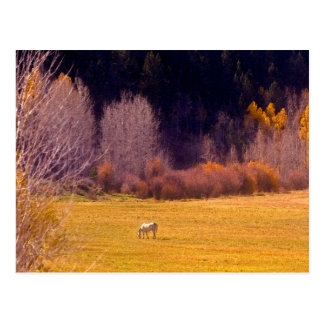 Horse In Fall I Postcard