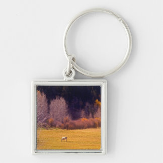 Horse In Fall I Silver-Colored Square Key Ring