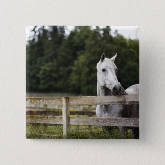 Horse in field looking over fence 15 cm square badge