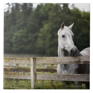 Horse in field looking over fence tile