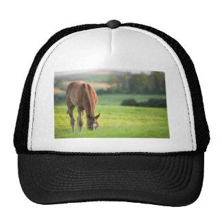 Horse in field near ballyvaloo, Blackwater, Wexfor Cap