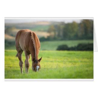 Horse in field near ballyvaloo, Blackwater, Wexfor Card