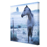 Horse in hazy field gallery wrapped canvas