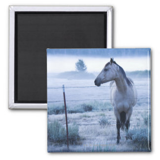 Horse in hazy field square magnet