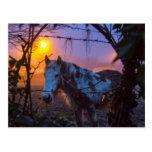 Horse in Irish Fog Postcards