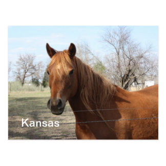 Horse in Kansas Postcard