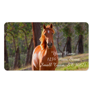 horse in pasture pack of standard business cards