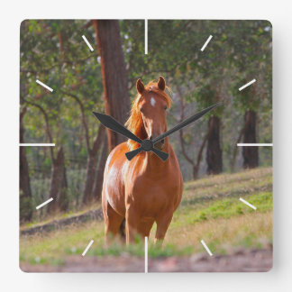 horse in pasture square wall clocks