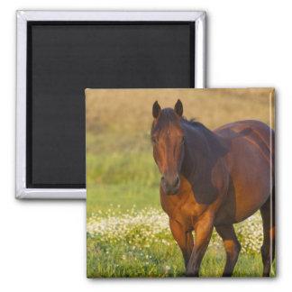 Horse in pasture near Pullman, Washington Square Magnet